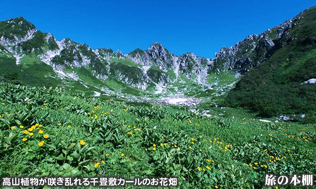 高山植物が咲き乱れる千畳敷カールのお花畑