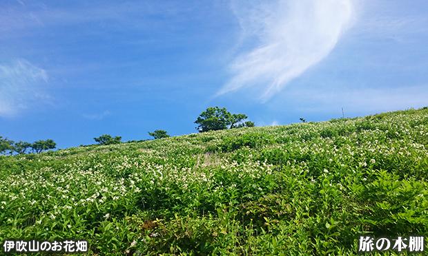 いろとりどりの高山植物がたくさん見られる伊吹山のお花畑
