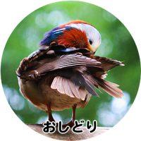 野鳥のしぐさや行動を楽しむ