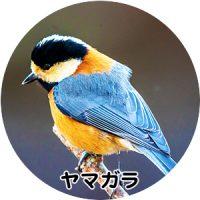 野鳥の「羽根の彩り」を楽しむ