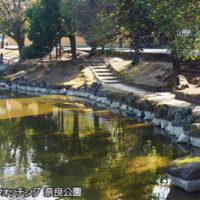 初めてのバードウォッチング 奈良公園