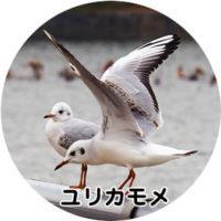 バードウォッチング基礎知識 鳥の渡り