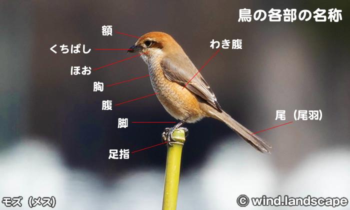 鳥の各部の名称