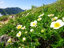 登山 山歩き トレッキング ツアー