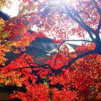 比叡山と湖東三山ハイキング【GoToトラベル事業支援対象】