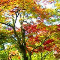 京都 紅葉の道を歩く【GoToトラベル事業支援対象】