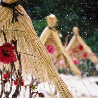 寒牡丹庭園