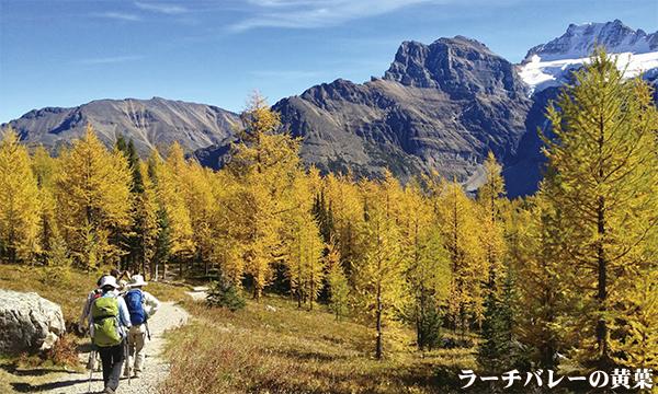 黄葉のカナディアンロッキー 秋のベストコースを歩く