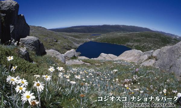 オーストラリア大陸最高峰 コジオスコ山(2228m)登頂と世界遺産エアーズロック