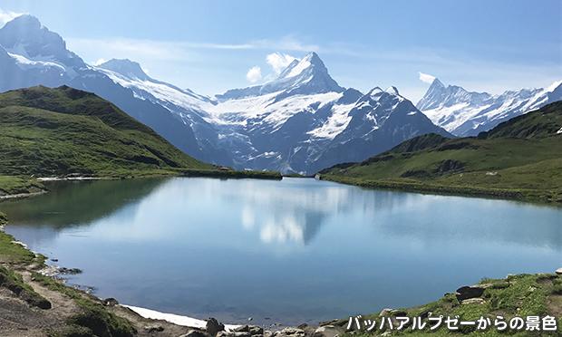 スイスの高山植物を楽しむ旅 スイスアルプス フラワーハイキング