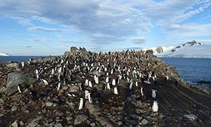 南極探検旅行 ハーフムーン島