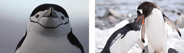 南極探検旅行 で見たい動物たち