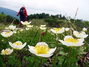 6月よりコロナ対策を行いながら山歩きツアーを再開します!
